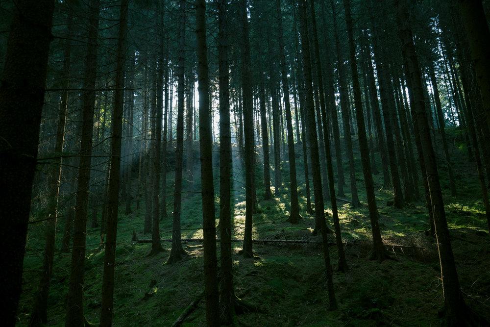 Sächsische_Schweiz_Wald.jpg