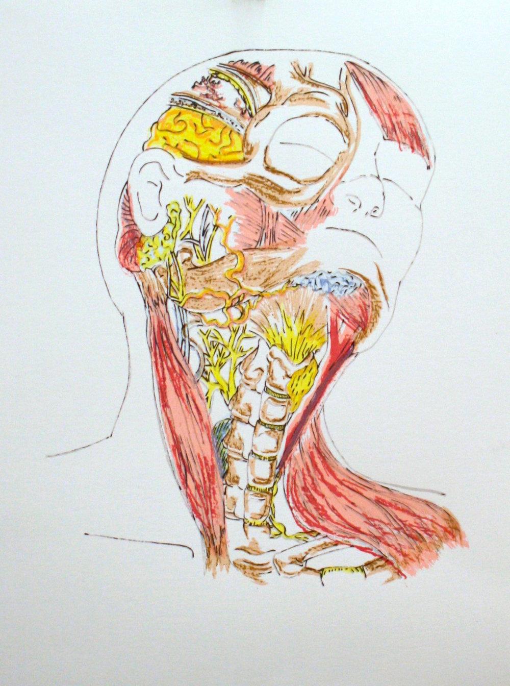 AnatomyScreenPrint2.jpg
