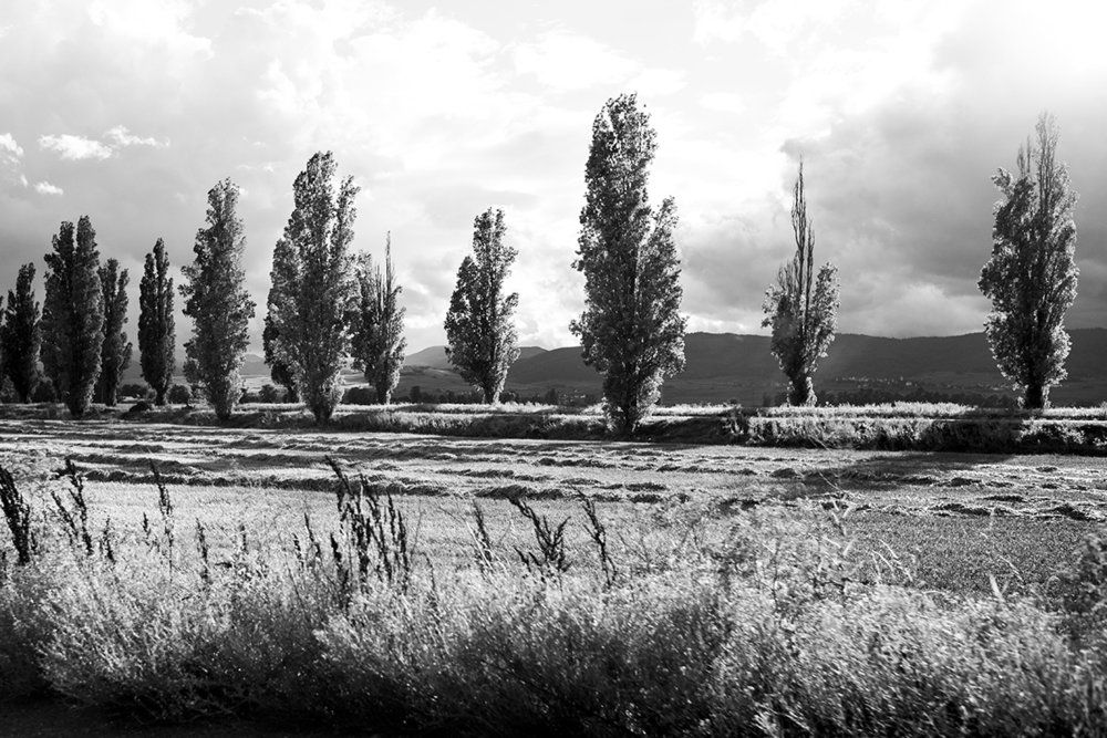 Trees in Alsace, France by Leica Photographer Manuel Guerzoni