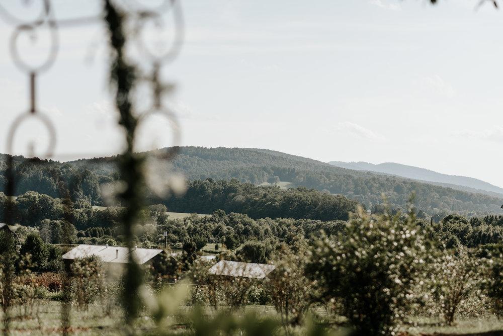 Lauren-Trell-Wedding-Market-at-Grelen-Virginia-Photography-by-V-9994.jpg