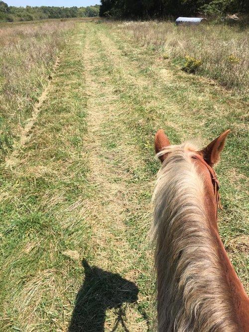 horse-back_orig.jpg