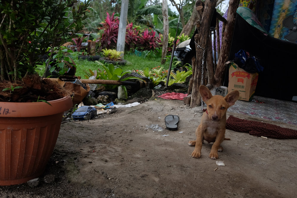 Lil fella at my cousin's house in Savai'i.