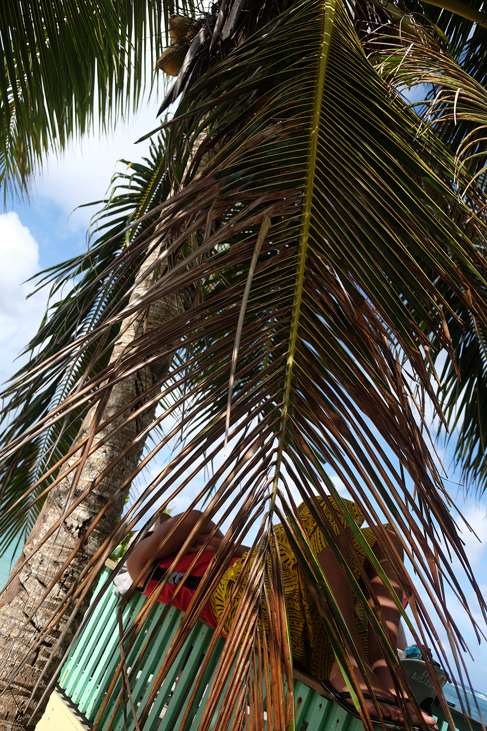 One of the nephew's sleeping under a coconut tree in Lalomanu, Upolu.