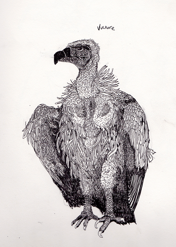 Vulture_Drawing_Web.png