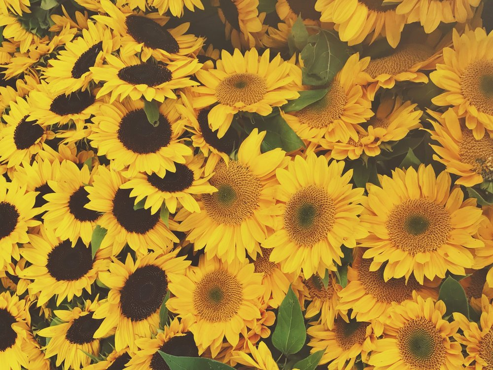 Self care Sunflowers (photo by me! at the Proctor Farmers Market)