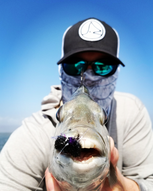 Fly fishing for Sheepshead