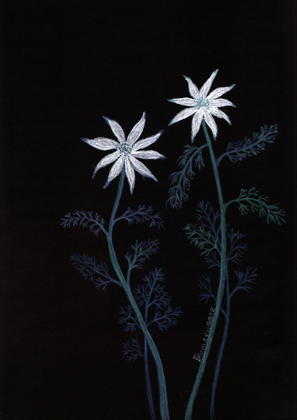 Dirk Romeyn's drawings'Flannel Flowers' and 'Study of Flowers' are in this winter Blue Mountains exhibition in Katoomba