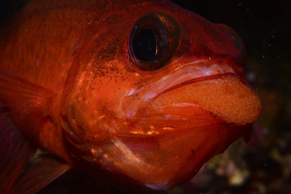Mejor Foto Fauna Fco jose Van Baumberghen y  Marcos Arufe.jpg