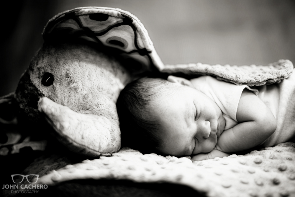 Charlottesville Virginia Newborn Portrait Photograph by John Cachero Photography