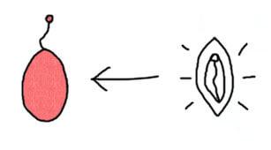 yoni-ei-anwendung-anleitung-wie-benutzt-man.jpg