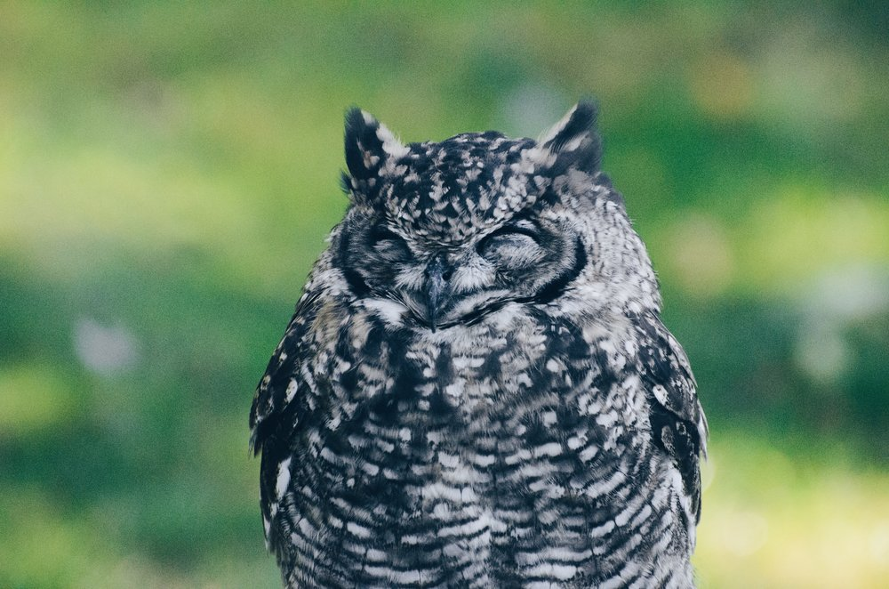 This owl looks far too comfy sleeping for it to be overrated. What are on about, John?