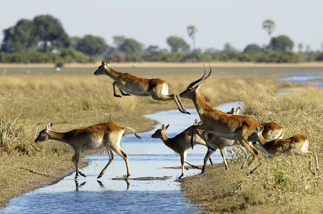 africa_photo_safari_okavango_delta_4