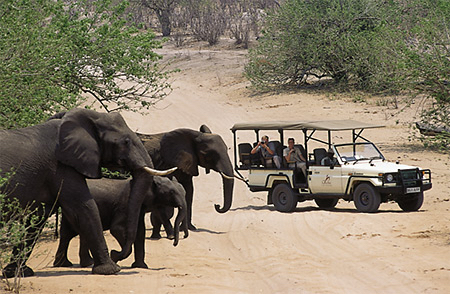 africa_photo_picture_safari