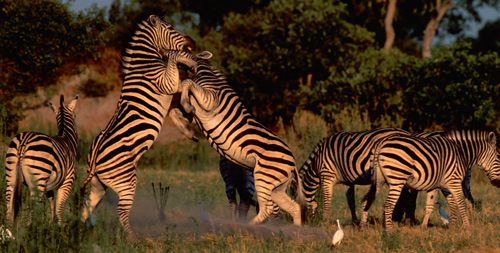 africa_photo_safari-africa_photo_safari