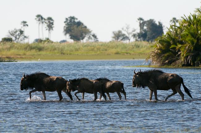 Africa_Picture_Safari_Botswana158.jpg