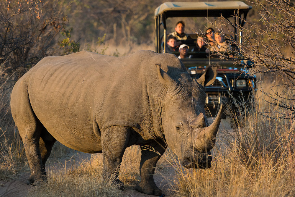 africa_photo_safari-south_africa