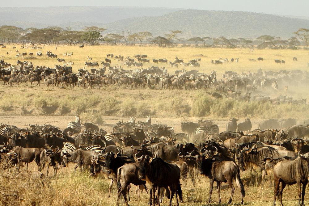 Africa_Photographic_Serengeti__1.jpg
