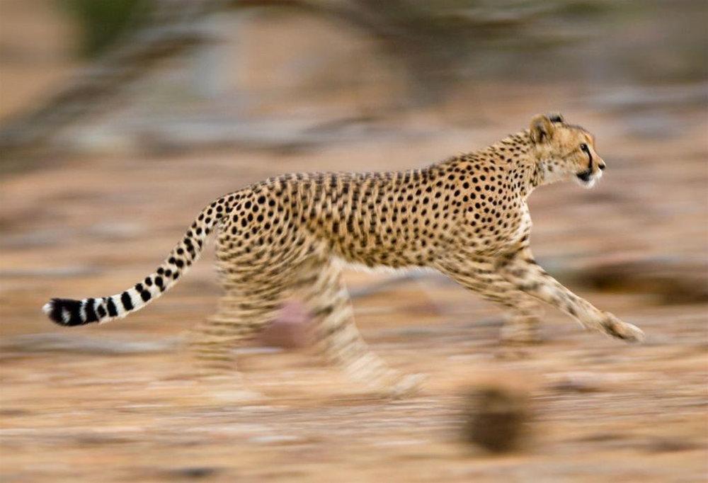 Africa_Photographic_Serengeti__3.jpg