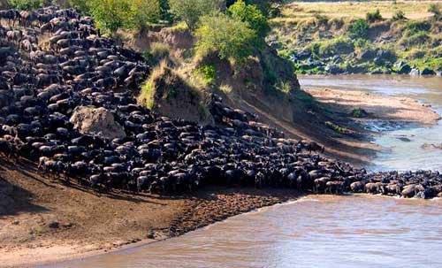 Africa_Photographic_Serengeti__5.jpg