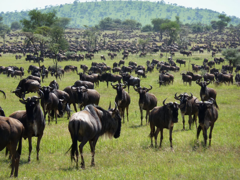 Africa_Photographic_Serengeti__6.jpg