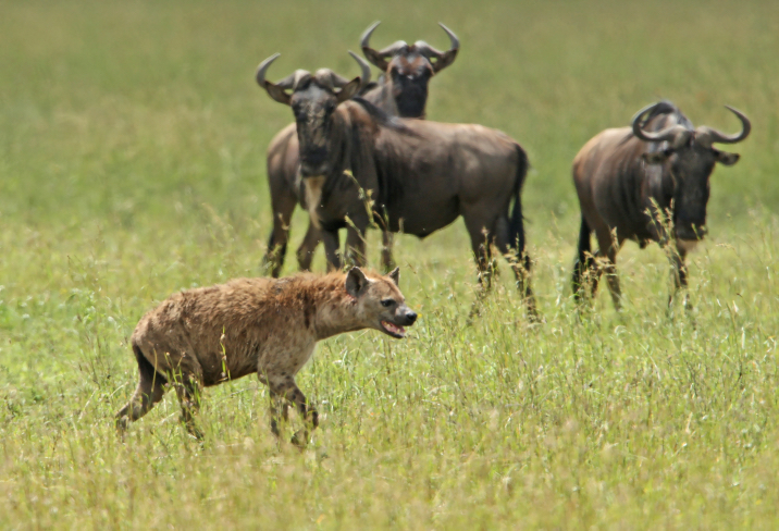 Africa_Photographic_Serengeti__7.jpg