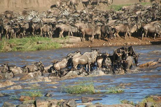 Africa_Photographic_Serengeti__8.jpg