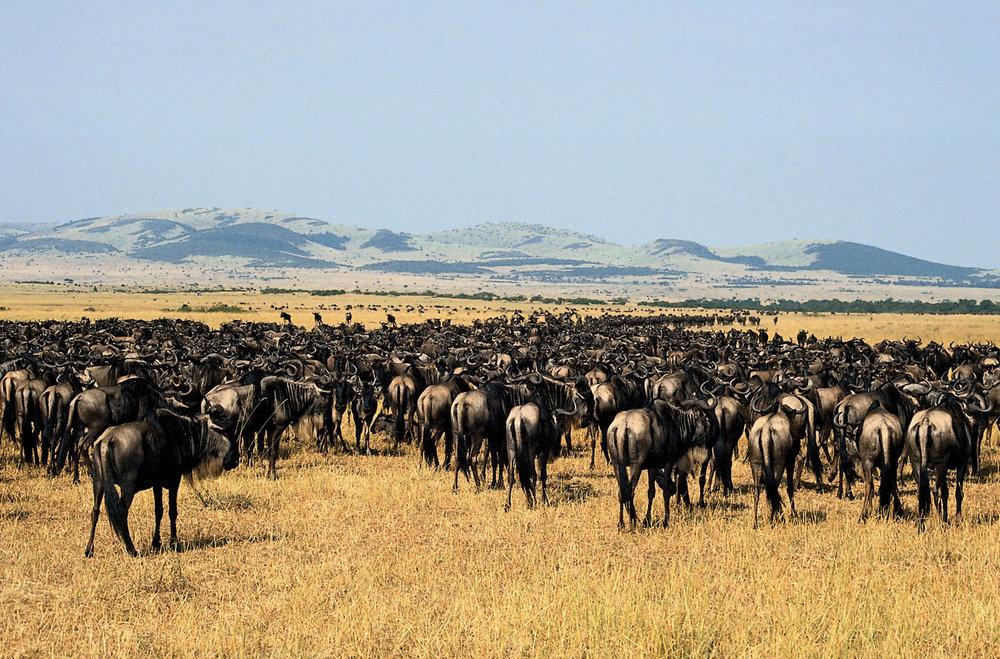 Africa_Photographic_Serengeti__10.jpg
