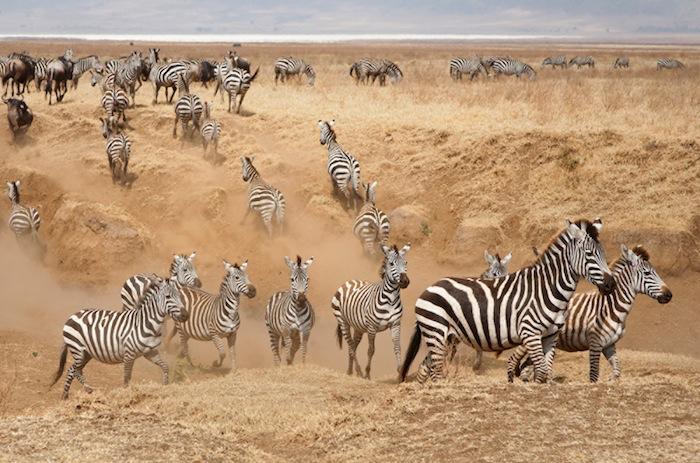 Africa_Photographic_Serengeti__11.jpg