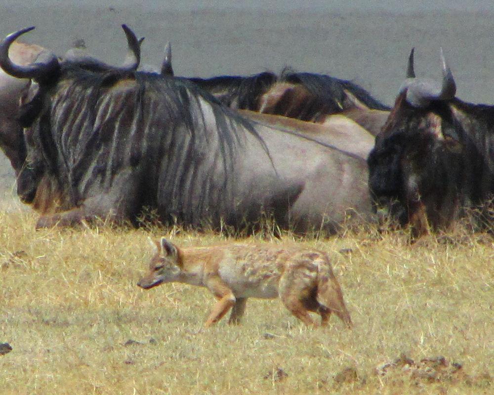 Africa_Photographic_Serengeti__14.jpg