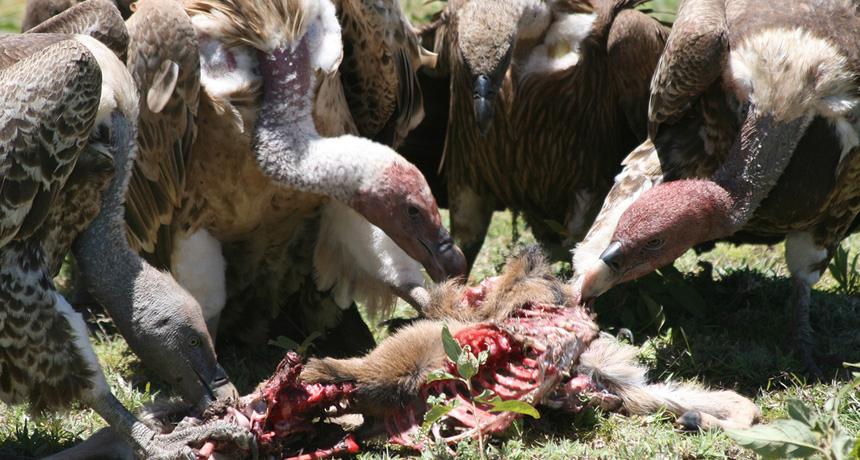 Africa_Photographic_Serengeti__15.jpg