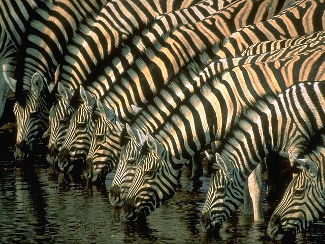 Africa_Photographic_Serengeti__17.jpg