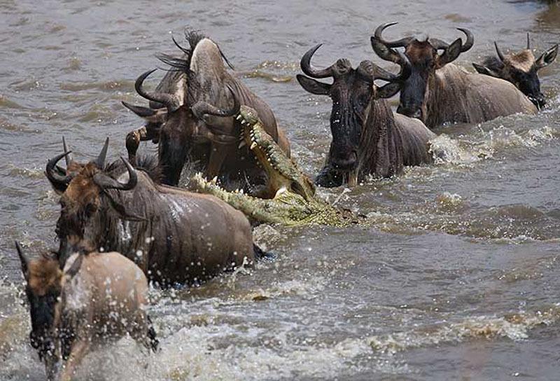 Africa_Photographic_Serengeti__21.jpg
