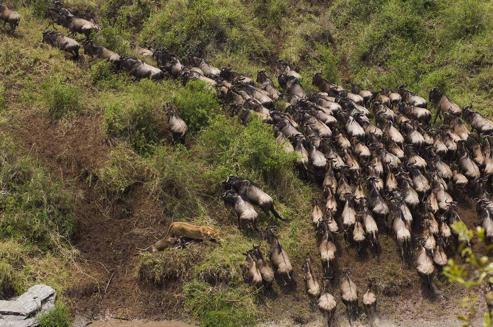 Africa_Photographic_Serengeti__19.jpg
