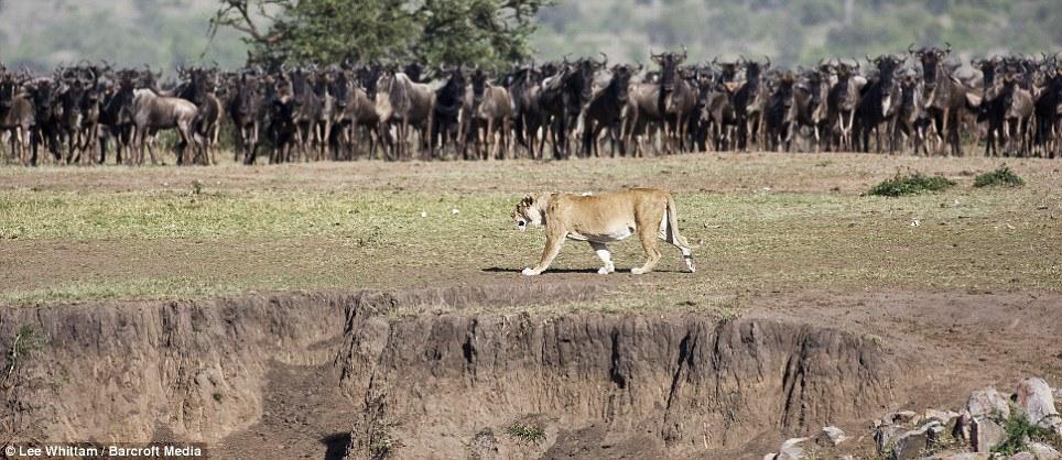 Africa_Photographic_Serengeti__22.jpg