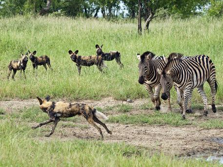 Africa_Photographic_Serengeti__24.jpg