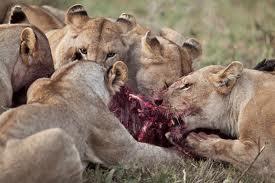 Africa_Photographic_Serengeti__25.jpg