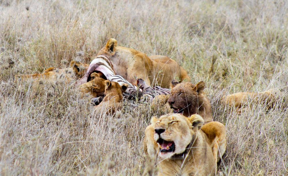 Africa_Photographic_Serengeti__26.jpg