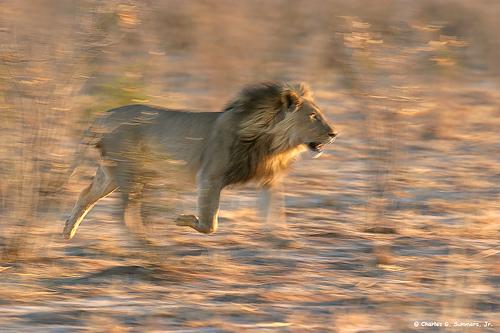 Africa_Photographic_Serengeti__27.jpg