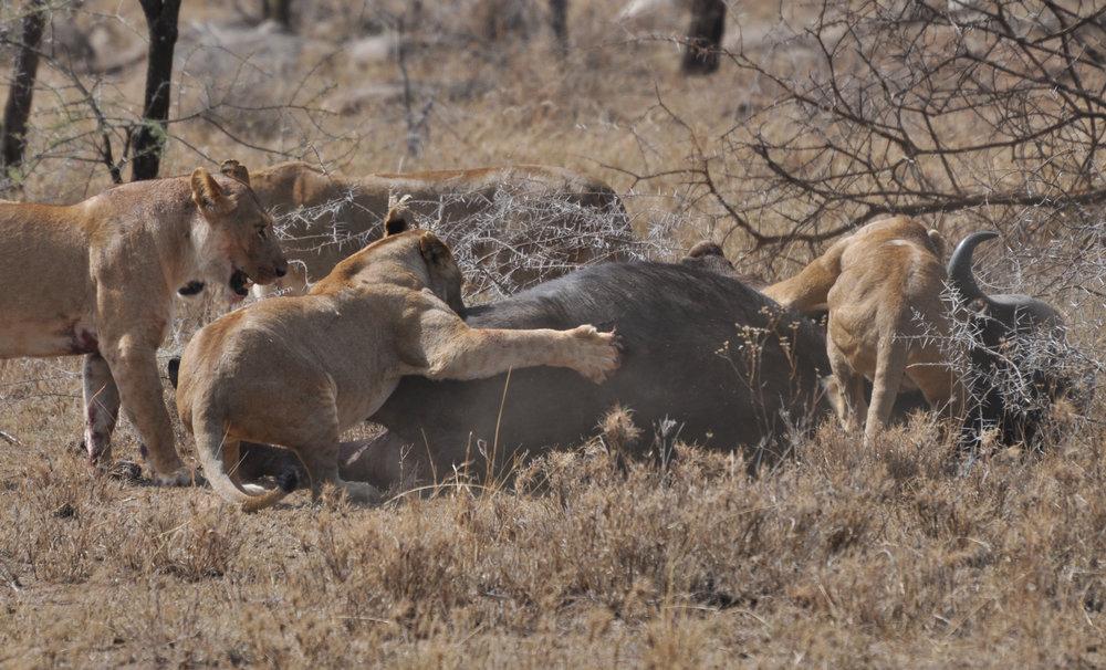 Africa_Photographic_Serengeti__23.jpg