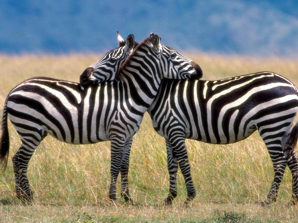 Africa_Photographic_Serengeti__31.jpg
