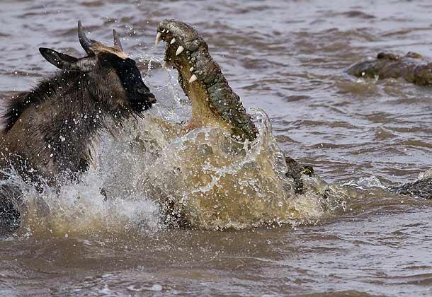 Africa_Photographic_Serengeti__32.jpg