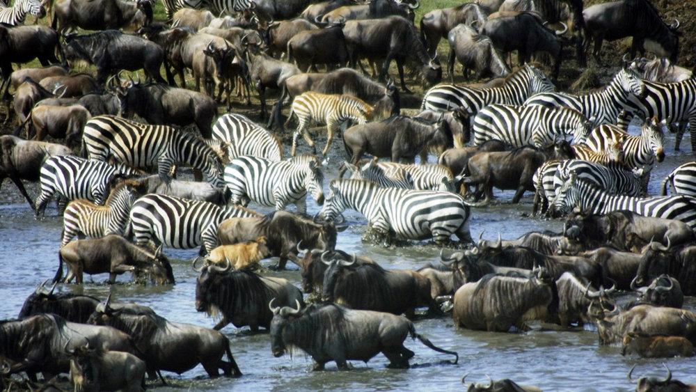 Africa_Photographic_Serengeti__34.jpg