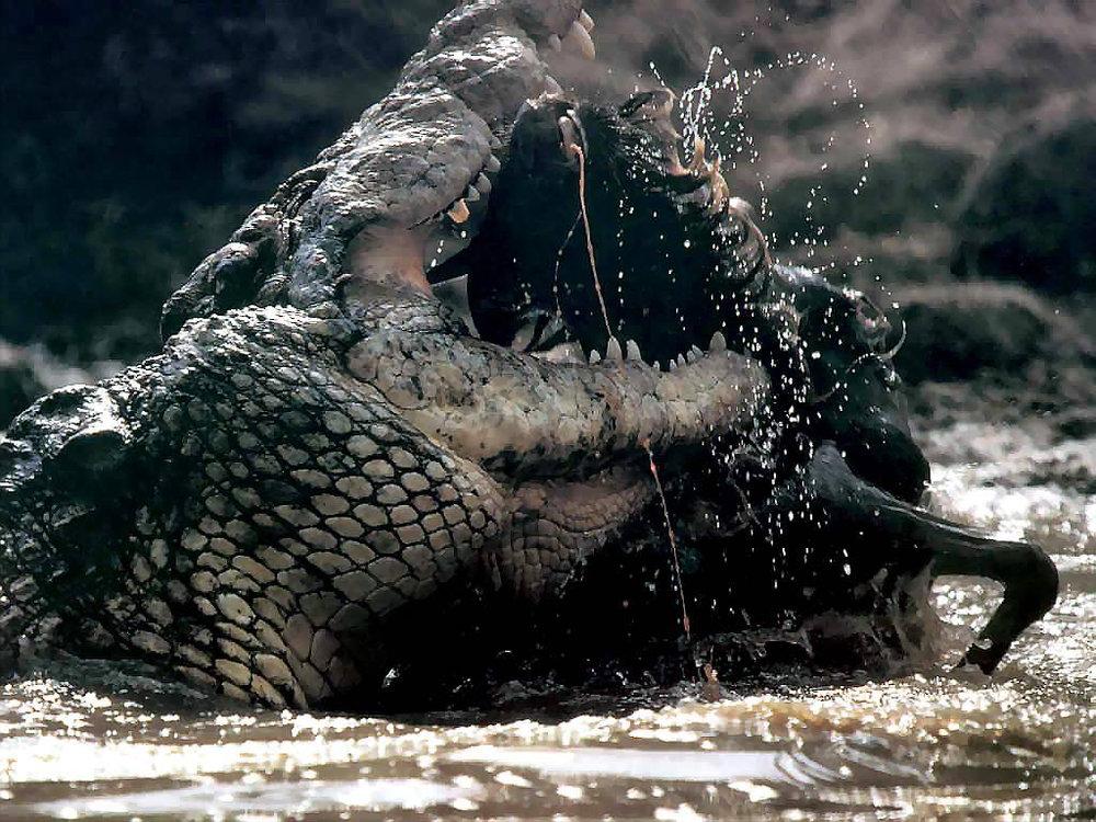 Africa_Photographic_Serengeti__35.jpg