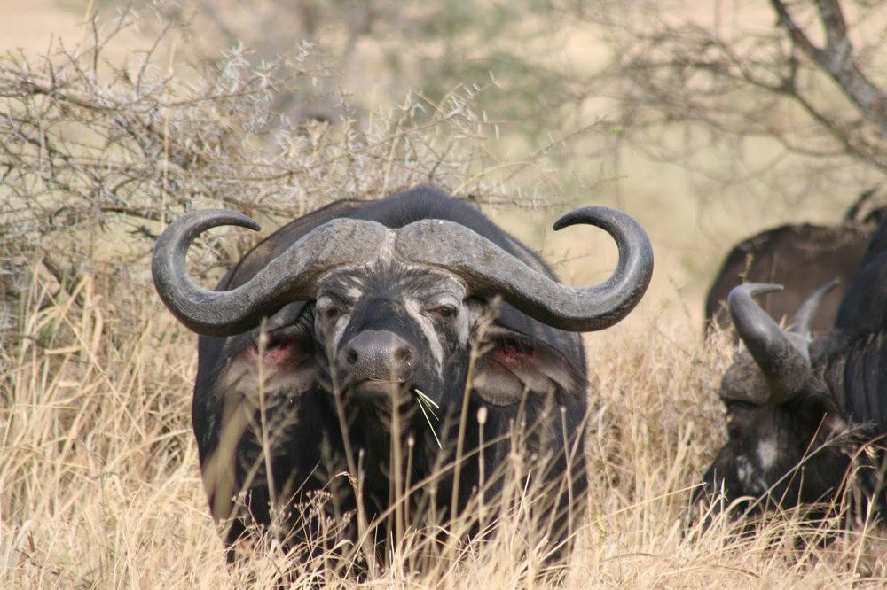 Africa_Photographic_Serengeti__36.jpg