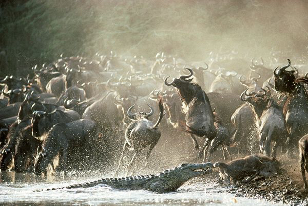 Africa_Photographic_Serengeti__37.jpg