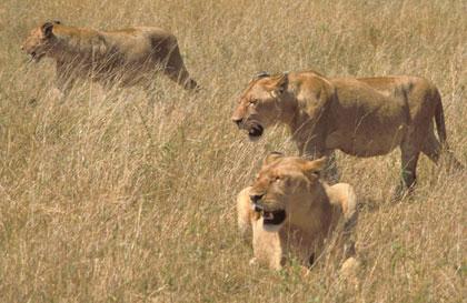 Africa_Photographic_Serengeti__38.jpg