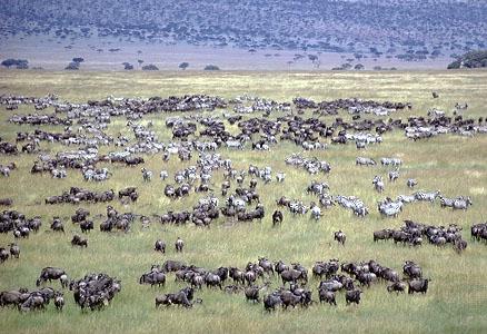 Africa_Photographic_Serengeti__41.jpg