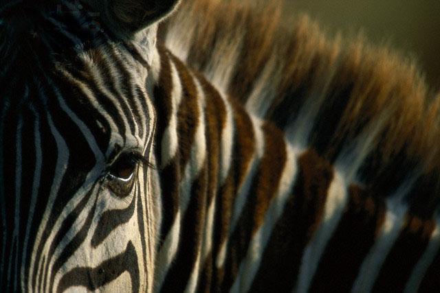 africa_photo_safari-africa_photo_safari-south_africa