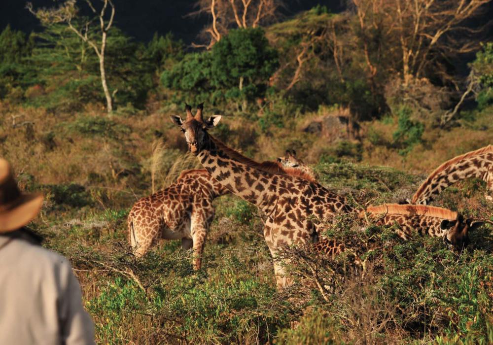 africa_photographic_safari-tanzania