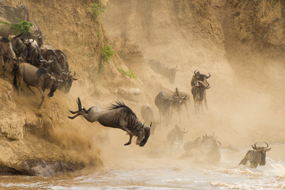 Tanzania Safari Great Migration
